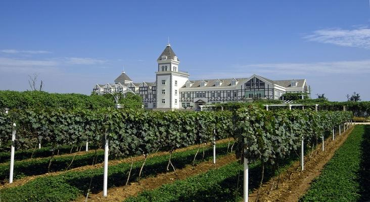张裕卡斯特葡萄酒庄园旅游景点风景